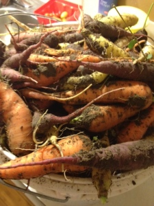 dirty carrots 2