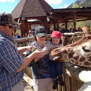 giraffes at zoo