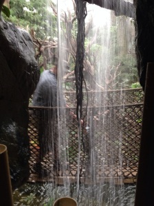 The rainforest had a rope bridge and waterfalls, too.